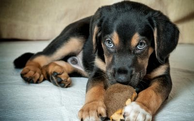 5 Home Cleaning Tips for Pet Owners