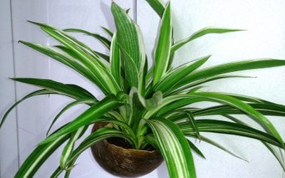 5 Non-Toxic Houseplants That are Safe for Pets